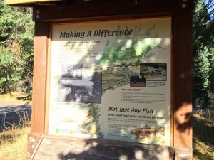 Trout Creek Fish Sign