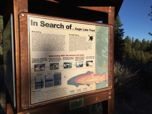 Eagle Lake Trout Sign